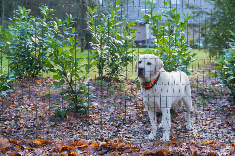 Things To Consider When Getting a Fence For Your Dog