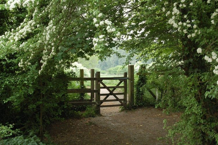 3 Ways to Take Care of Your Wooden Gates